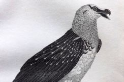 4th March 2020. Cuvier Birds & Natural History Prints